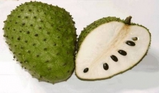 Fresh and Frozen Soursop